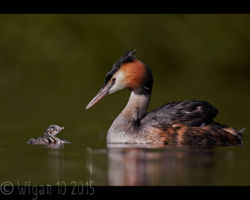 GB Cup Nature 2015