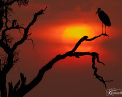Marabou Sunset - Amateur Photography Club