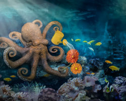 Octopuses Garden - Amateur Photography